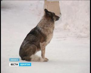Морозы в Удмуртии ставят рекорды