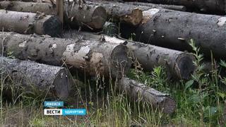 Полиция возбудила уголовное дело по факту вырубки деревьев в Ижевске