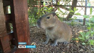 В зоопарке Удмуртии гостям показали нового постояльца