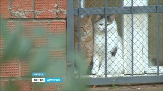 Несколько лет продолжается конфликт между хозяевами приюта для животных и жителями многоэтажки