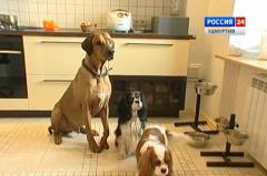 Рублём будут наказывать жителей Удмуртии за неправильное содержание домашних питомцев